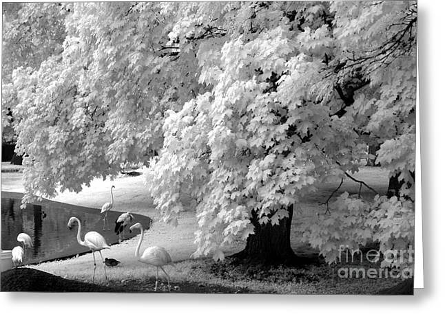 Surreal Infrared Dreamy Landscape Greeting Cards - Surreal Black White Infrared Flamingo Nature Scene Greeting Card by Kathy Fornal