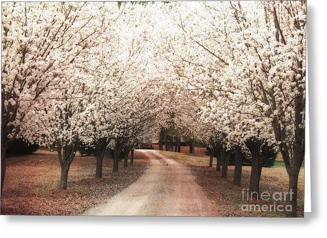 Surreal Nature Photography By Kathy Fornal Greeting Cards - Surreal Dreamy Dogwood Trees South Carolina Greeting Card by Kathy Fornal