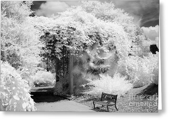 Dreamy Infrared Greeting Cards - Surreal Dreamy Ethereal Black and White Infrared Garden Landscape Greeting Card by Kathy Fornal