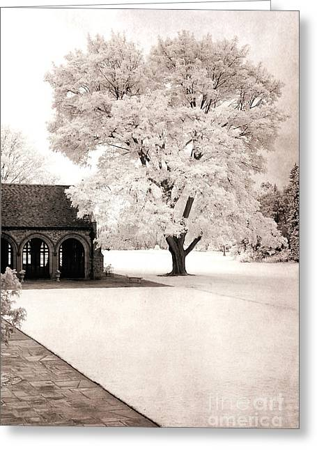 Park Scene Photographs Greeting Cards - Surreal Dreamy Ethereal Winter White Sepia Infrared Nature Tree Landscape Greeting Card by Kathy Fornal