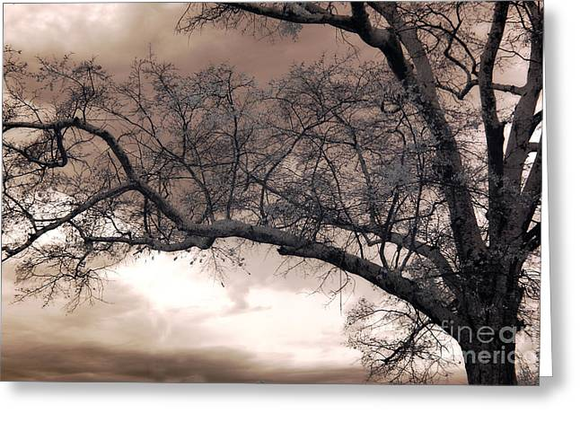 Surreal Fantasy Trees Landscape Greeting Cards - Surreal Fantasy Gothic South Carolina Oak Trees Greeting Card by Kathy Fornal