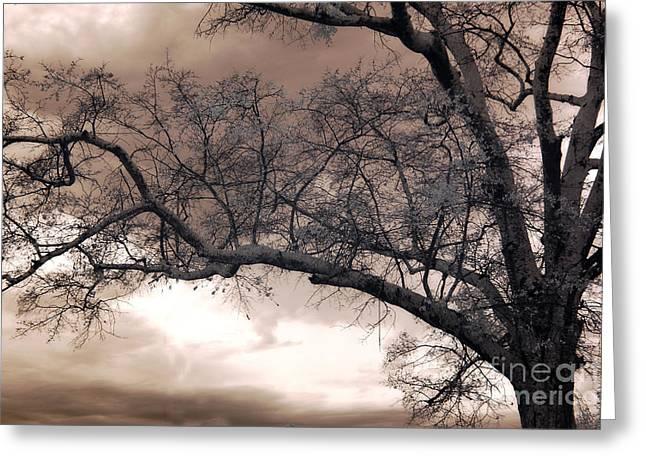 Surreal Fantasy Gothic South Carolina Oak Trees Greeting Card by Kathy Fornal