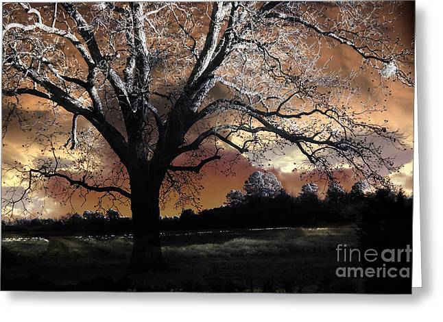 Surreal Fantasy Trees Landscape Greeting Cards - Surreal Fantasy Gothic Trees Nature Sunset Greeting Card by Kathy Fornal
