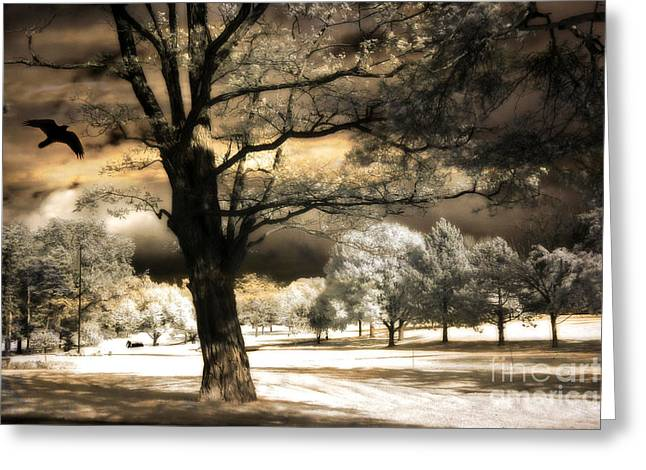 Surreal Infrared Photos By Kathy Fornal. Infrared Greeting Cards - Surreal Fantasy Infrared Trees Raven Landscape  Greeting Card by Kathy Fornal