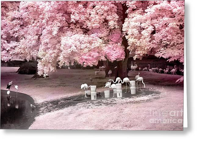 Surreal Infrared Dreamy Landscape Greeting Cards - Surreal Fantasy Pink Flamingo Pond Infrared Nature Greeting Card by Kathy Fornal