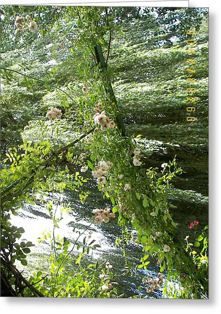 James Dolan Greeting Cards - Surreal Garden Greeting Card by James Dolan
