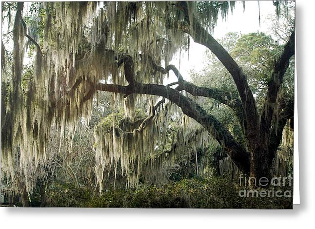 Surreal Photography Greeting Cards - Surreal Gothic Savannah Georgia Trees with Hanging Spanish Moss Greeting Card by Kathy Fornal