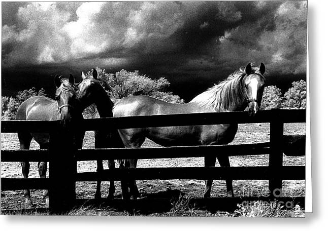 Surreal Photography Greeting Cards - Surreal Horses Stormy Black And White Infrared Horse Landscape Greeting Card by Kathy Fornal
