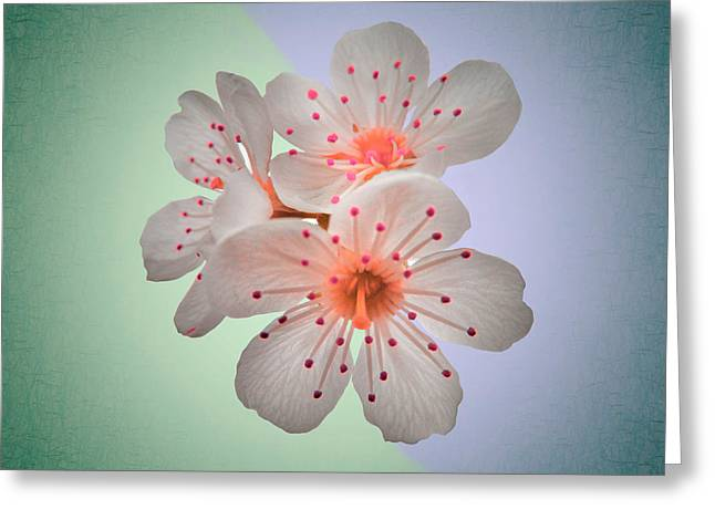 Flora Art Greeting Cards - Surreal Sakura - Close up Floral Fine Art Photography Greeting Card by Marianna Mills