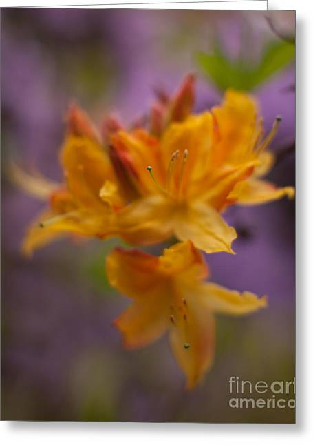 Surrealistic Blooms Greeting Card by Mike Reid