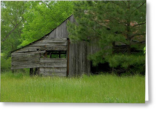 Store Fronts Greeting Cards - Surrounded by Green Greeting Card by Danny Pickens