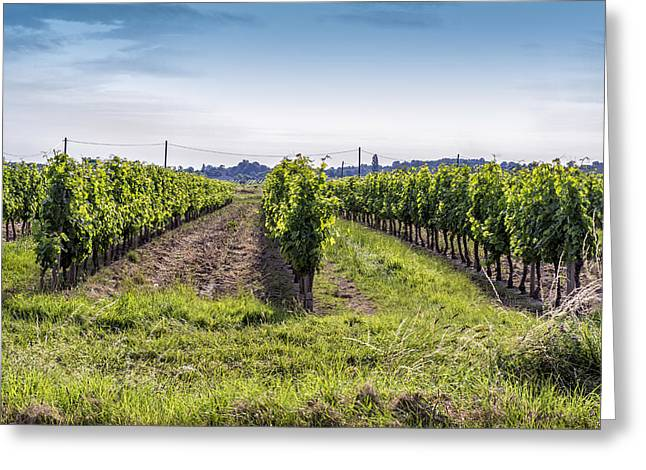 Grape Vine Greeting Cards - Surrounded by Vineyards Greeting Card by Nomad Art And  Design