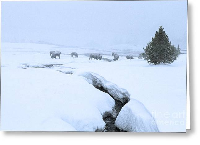 Winter Landscape With Animals Greeting Cards - Survival Greeting Card by Sandra Bronstein