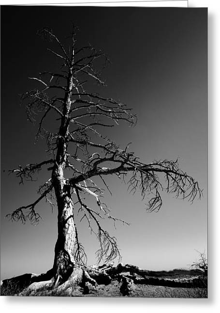 Monochrome Greeting Cards - Survival Tree Greeting Card by Chad Dutson