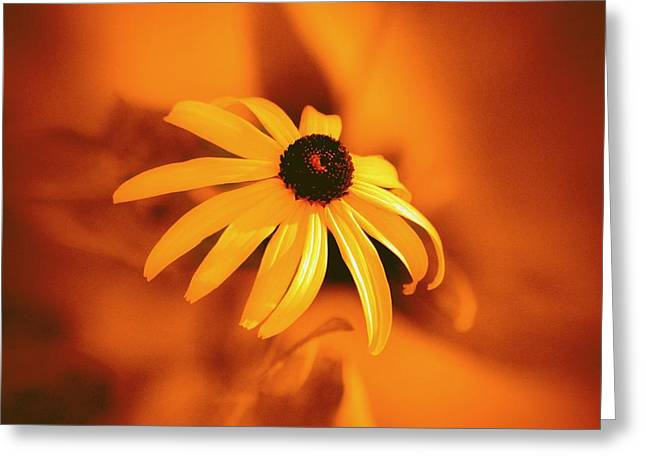 Warm Summer Greeting Cards - Susan Greeting Card by Robert Geary