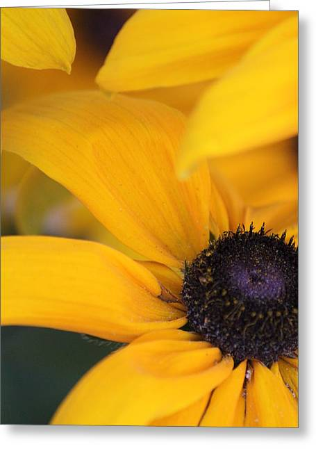 Flower Design Greeting Cards - Susan Greeting Card by Ronald Lake