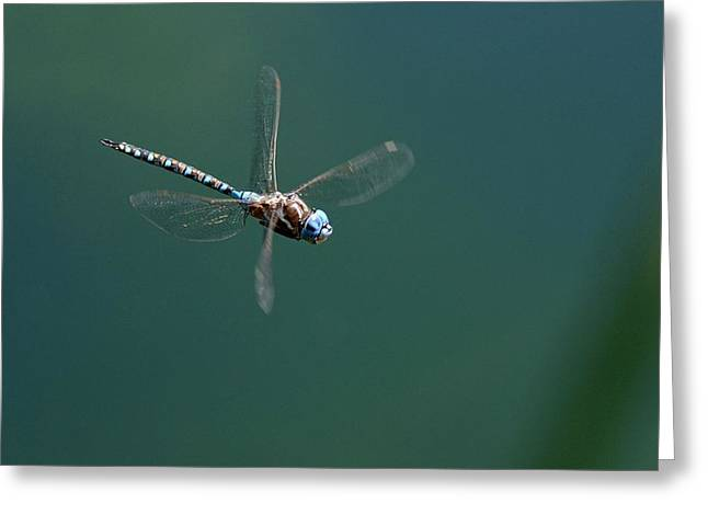 Hovering Greeting Cards - Suspended Animation Greeting Card by Fraida Gutovich