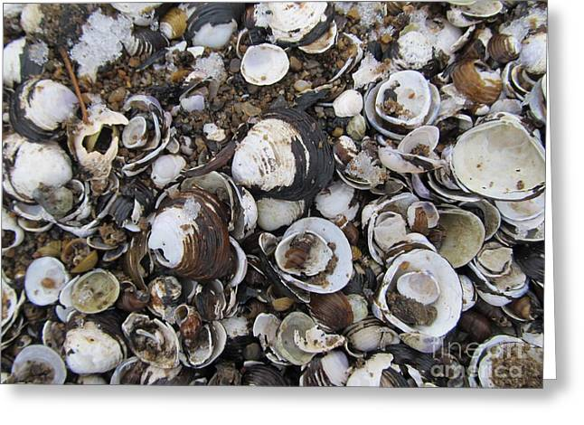 Shellscape Greeting Cards - Susquehanna Shellscape Greeting Card by Joshua Bales