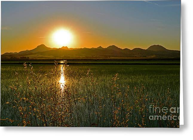 Colusa Greeting Cards - Sutter Buttes rice field inspirations Greeting Card by Michelle Zearfoss
