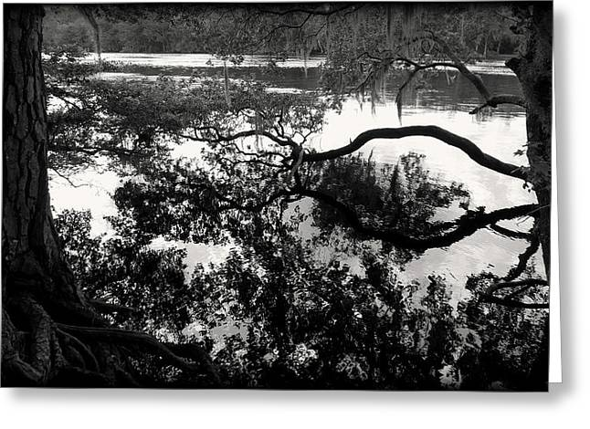Chiefland Greeting Cards - Suwannee Reflection B/W Greeting Card by Sheri McLeroy