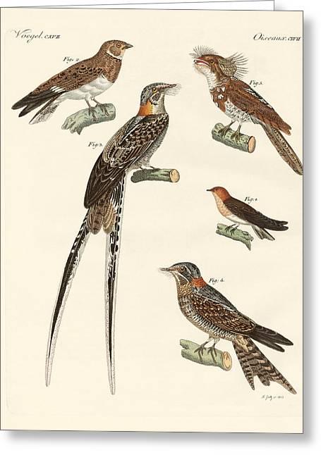 Nightjars Greeting Cards - Swallow-like birds Greeting Card by Splendid Art Prints