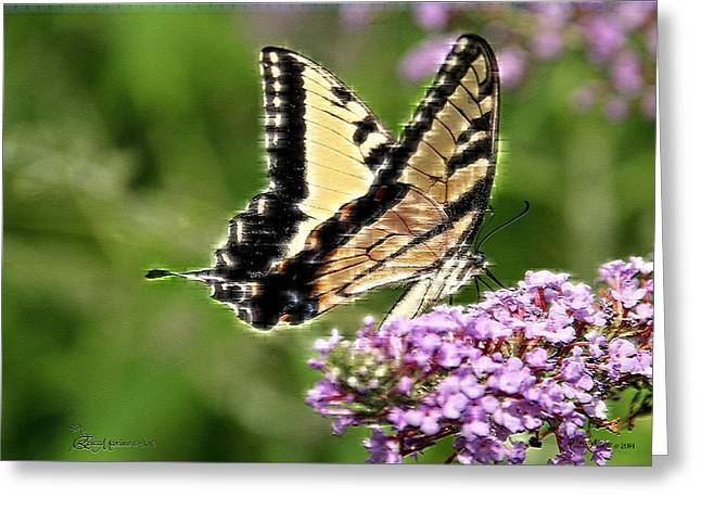 Tiger Swallowtail Digital Art Greeting Cards - Swallowtail 267 Greeting Card by EricaMaxine  Price
