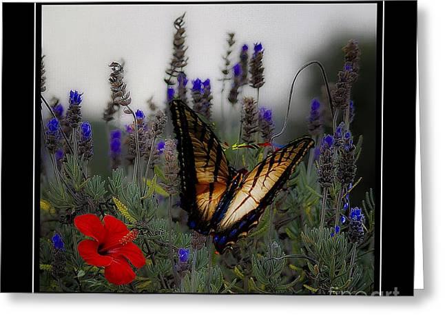 John Kolenberg Greeting Cards - Swallowtail Among Blue Flowers Greeting Card by John  Kolenberg
