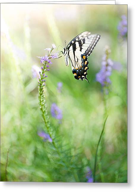 Freedom Pyrography Greeting Cards - Swallowtail Butteerfly Greeting Card by Vincent  Dale