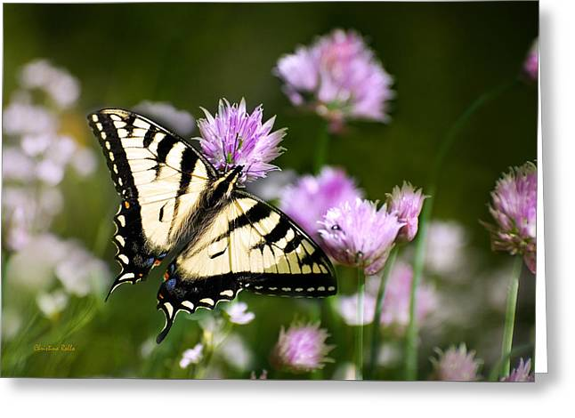 Butterfly On Flower Greeting Cards - Swallowtail Butterfly Dream Greeting Card by Christina Rollo