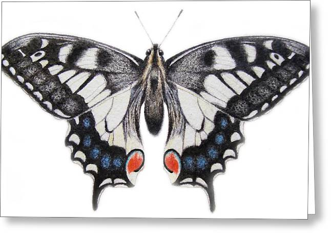 Butterflies Drawings Greeting Cards - Swallowtail Greeting Card by Ele Grafton