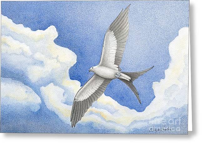 Kite Greeting Cards - Swallowtail Kite Greeting Card by Wayne Hardee