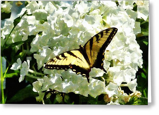 Designs By Susan Greeting Cards - Swallowtail on White Hydrangea Greeting Card by Susan Savad