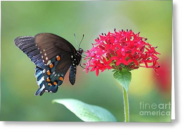 Pamela Gail Torres Greeting Cards - Swallowtail Greeting Card by Pamela Gail Torres