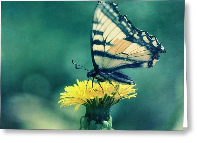 Fluttering Greeting Cards - Swallowtail Greeting Card by Priska Wettstein