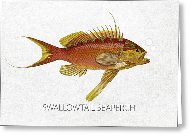 Salt Water Greeting Cards - Swallowtail seaperch Greeting Card by Aged Pixel
