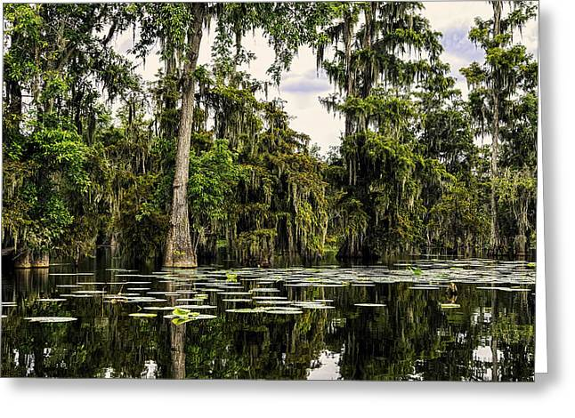 Swampland Greeting Cards - Swamp Beauty Greeting Card by Janet Fikar