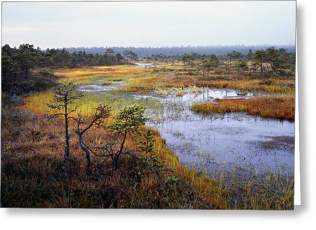 To Travel Greeting Cards - Swamp Beauty Greeting Card by Romeo Koitmae