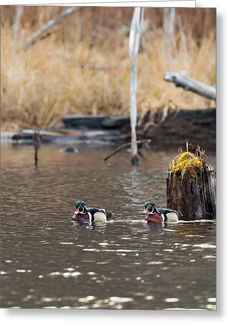 The Swamp Greeting Cards - Swamp Buddies Portrait Greeting Card by Bill  Wakeley