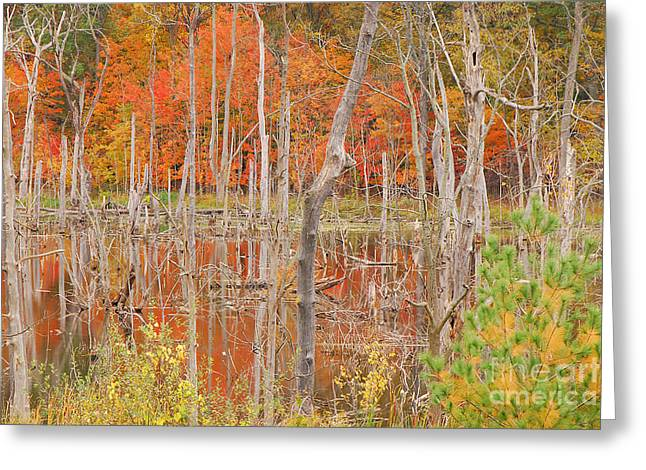 Indiana Autumn Greeting Cards - Swamp Colors Greeting Card by Mary Carol Story