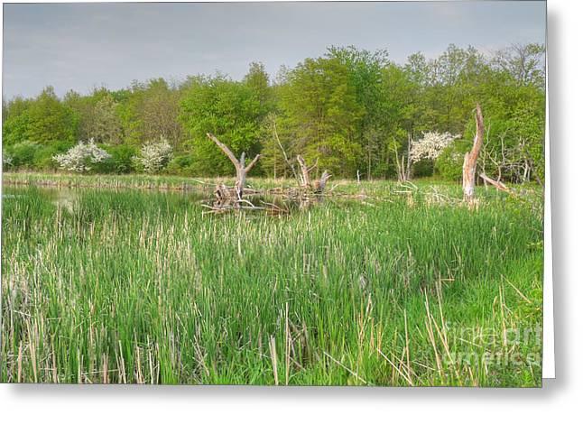 Vale Greeting Cards - Swamp Corner Greeting Card by Deborah Smolinske