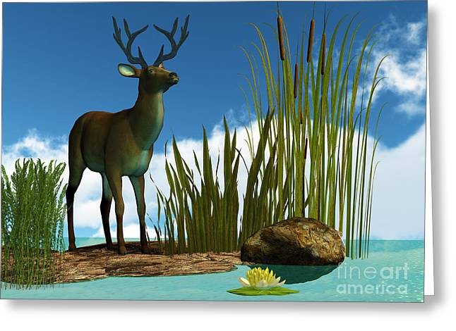 Lilly Pads Greeting Cards - Swamp Deer Greeting Card by Corey Ford