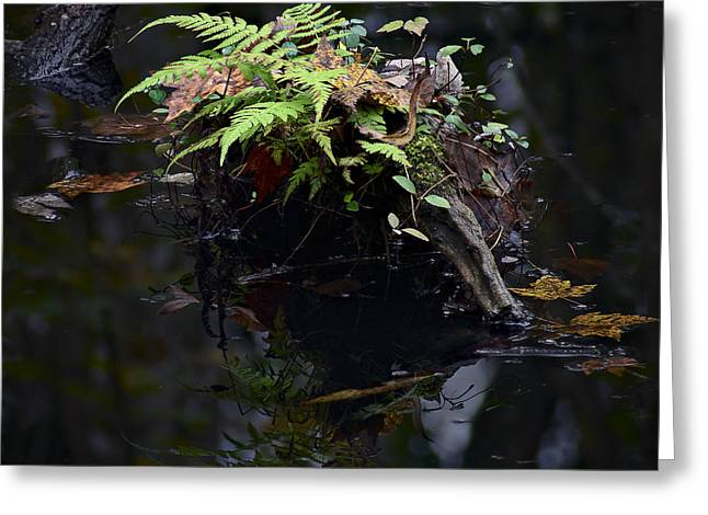 Tannic Greeting Cards - Swamp Fern Greeting Card by Bill Chambers