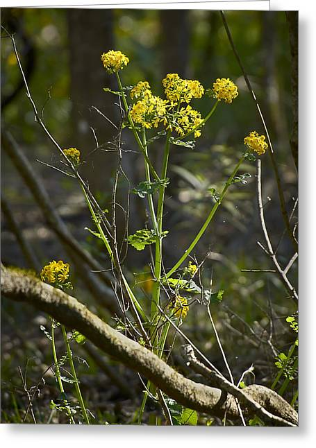 Tannic Greeting Cards - Swamp Flowers Greeting Card by Bill Chambers