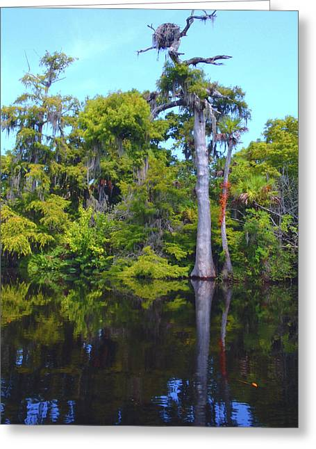 Hobe Sound Greeting Cards - Swamp Land Greeting Card by Carey Chen