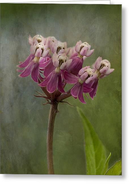 Swamp Milkweed Greeting Cards - Swamp Milkweed in Textures Greeting Card by Kathryn Whitaker