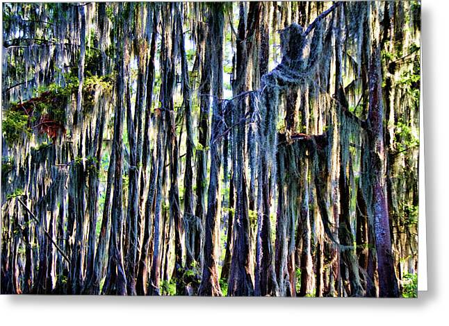 Caddo Lake Greeting Cards - Swamp Moss Greeting Card by Lana Trussell