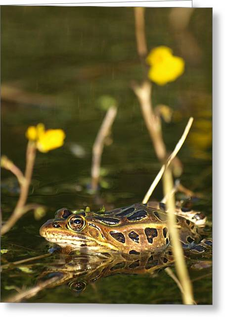 Morph Greeting Cards - Swamp Muscian Greeting Card by James Peterson