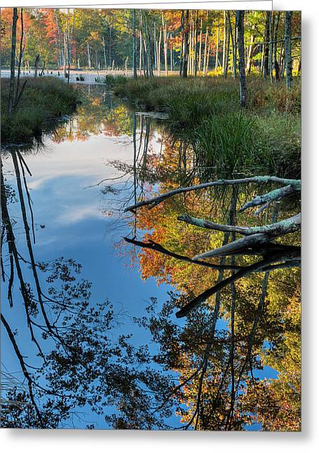 The Swamp Greeting Cards - Swamp Reflections Greeting Card by Bill  Wakeley