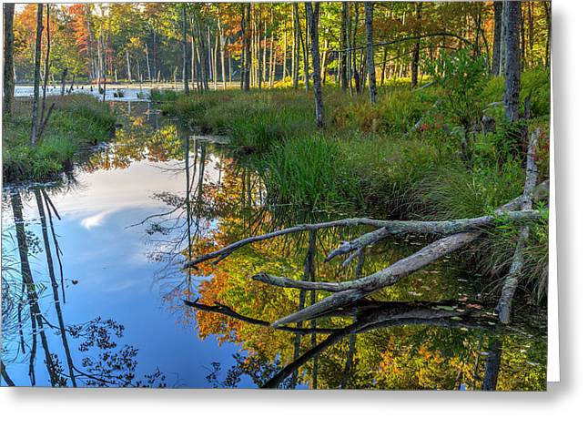 The Swamp Greeting Cards - Swamp Reflections Landscape Greeting Card by Bill  Wakeley