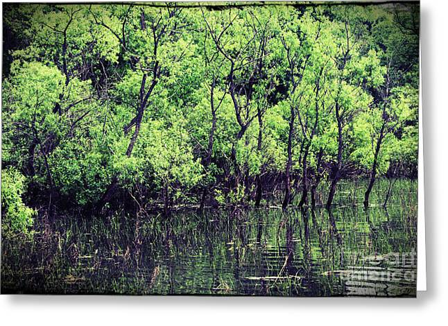 Canada Photograph Greeting Cards - Swamp Greeting Card by Sophie Vigneault